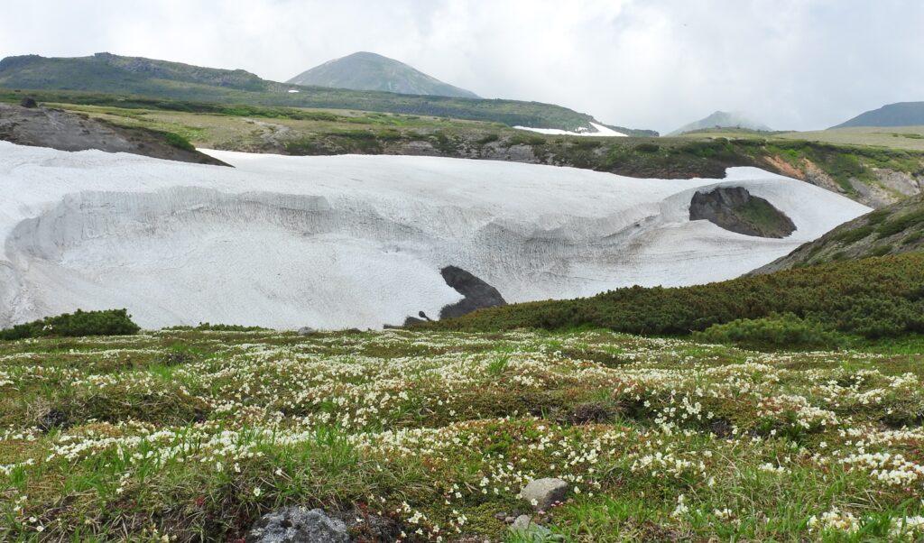 イワウメの絨毯と凌雲岳